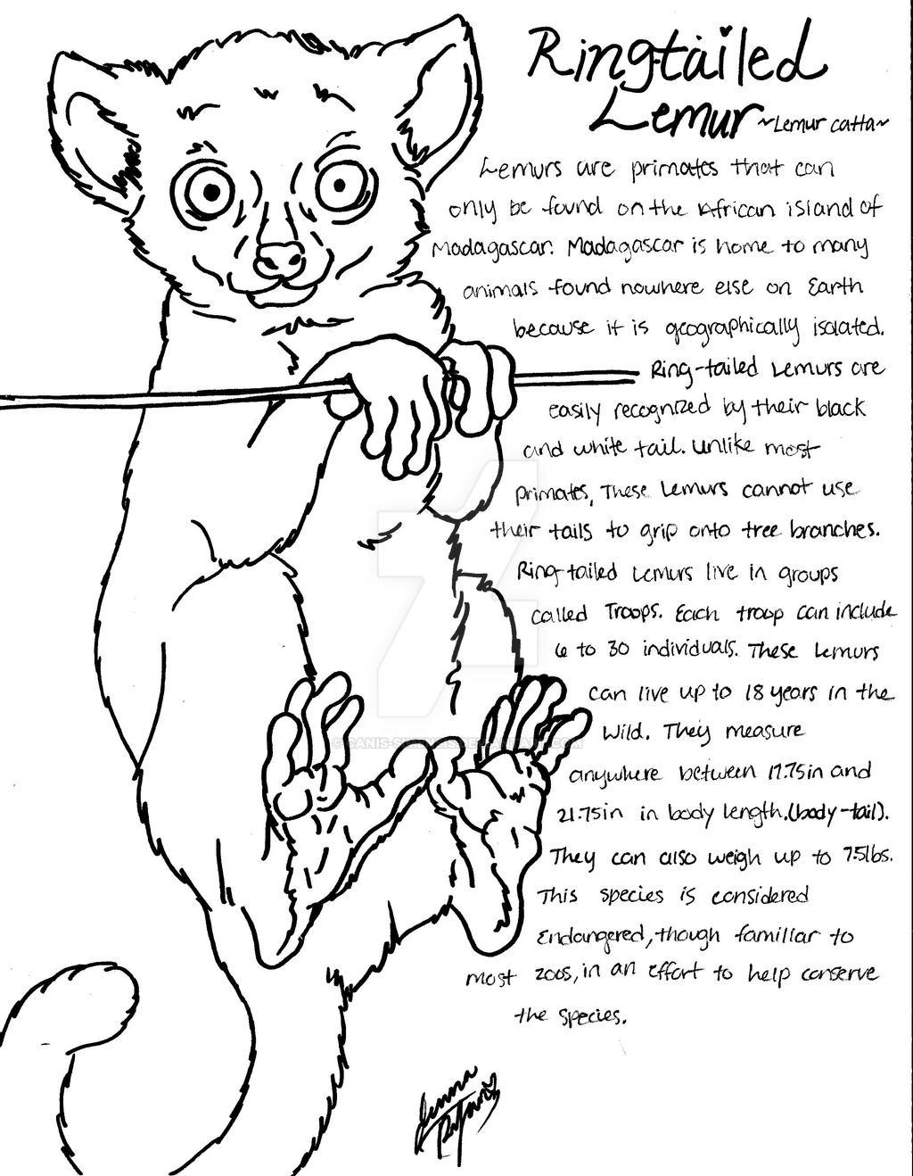 Lemur coloring page - Animals Town - Free Lemur color sheet | 1318x1024