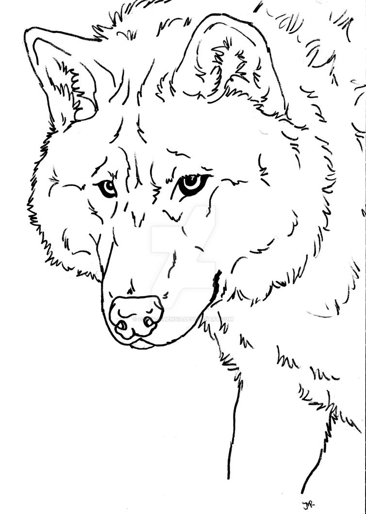wolf dog coloring page by Canis-Simensis