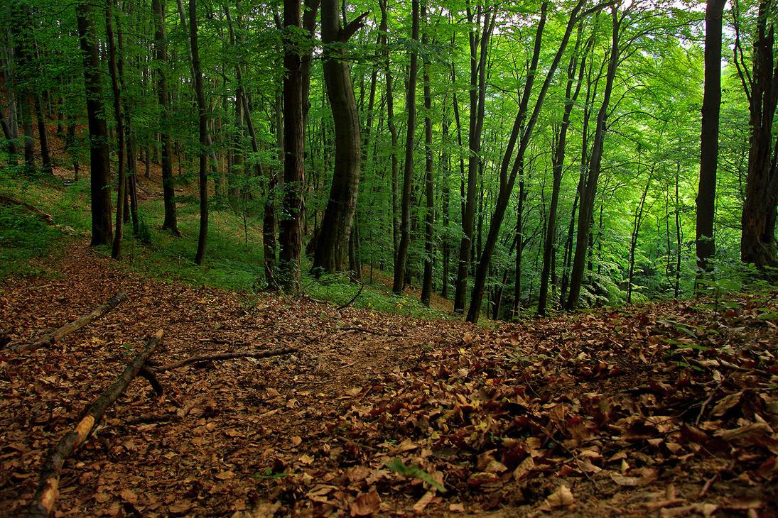 Majdanpek - Forest by newintenz