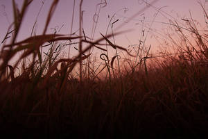 Endless Fields by newintenz