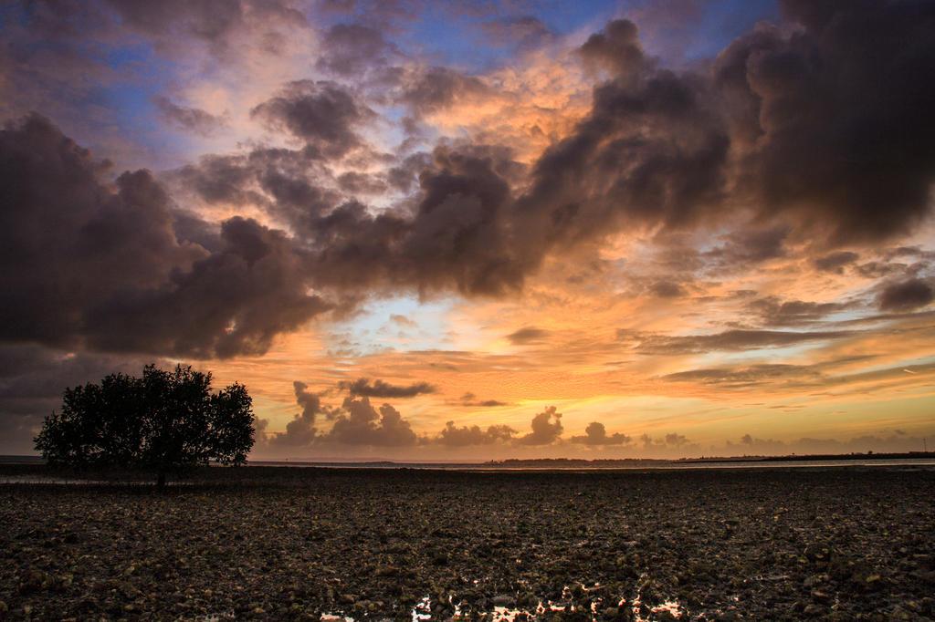 Golden Sunrise by newintenz