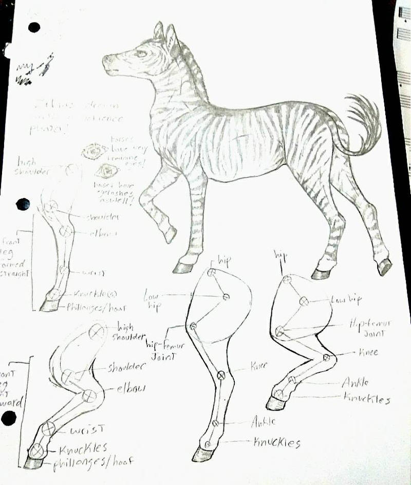 horse anatomy practice by th1stlew1ng on DeviantArt