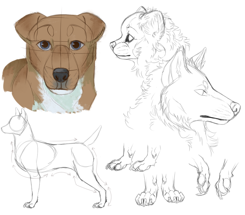 Dog anatomy practice by th1stlew1ng on DeviantArt