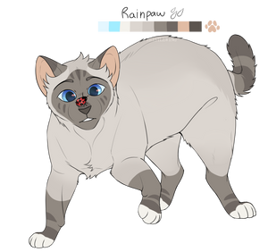 Rainpaw Ref by th1stlew1ng
