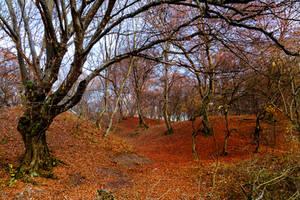 Baciu forest by Reiep