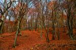 Baciu forest - 2