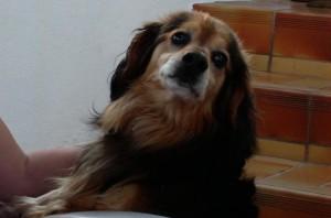 noir-devil's Profile Picture