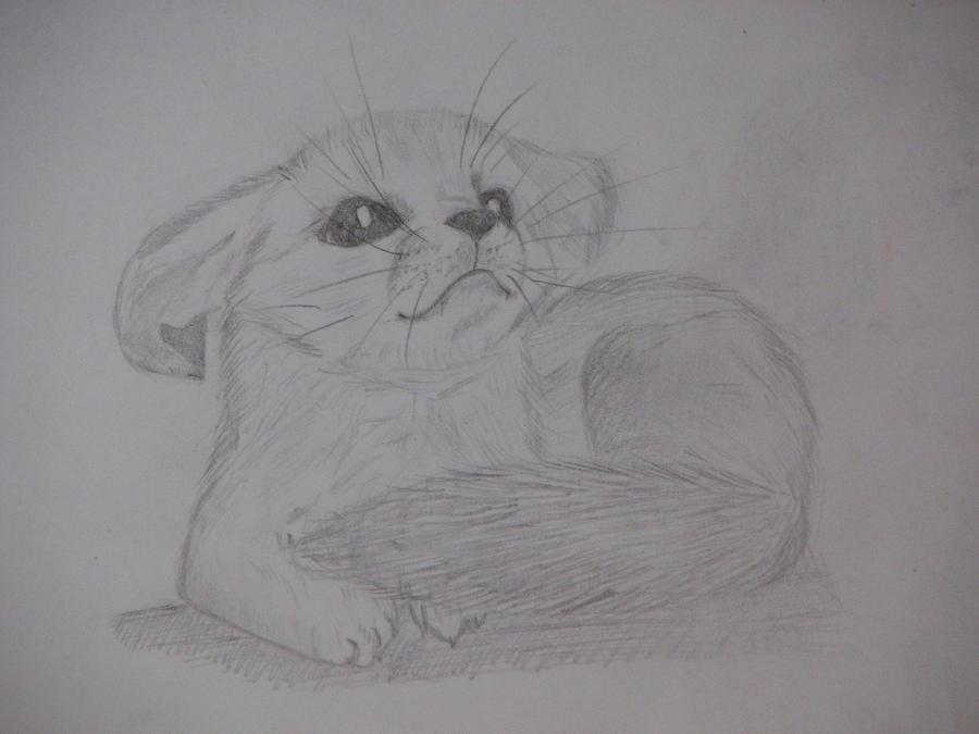 Baby fennec fox drawing