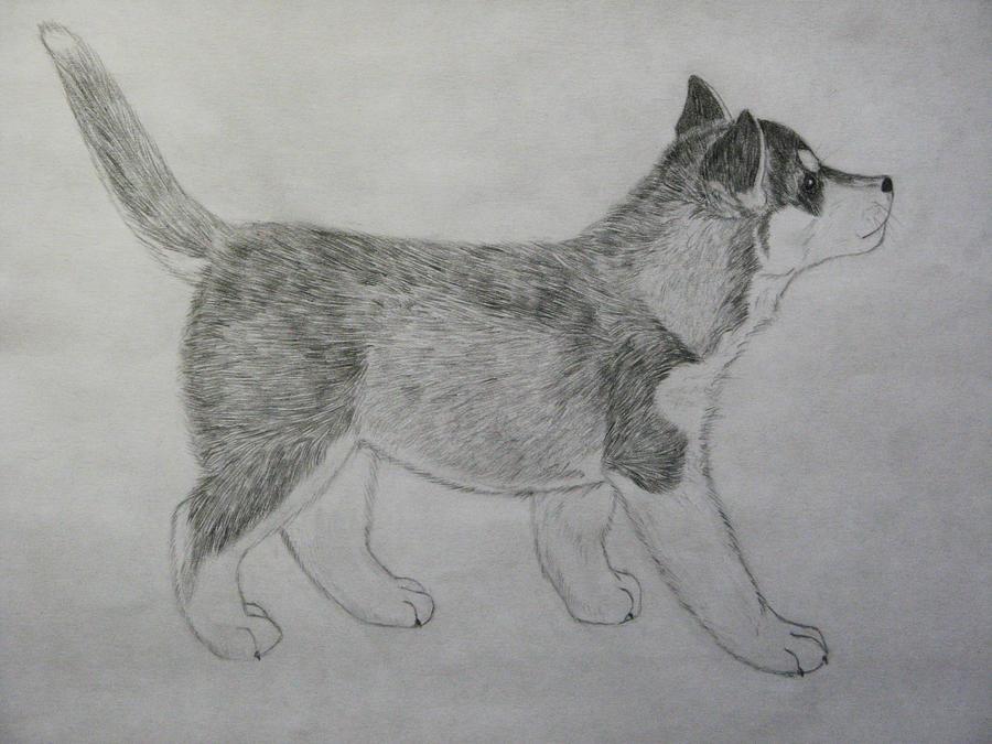Cute Husky Puppy Drawings Husky puppy by panda-kiddieCute Husky Puppy Drawings