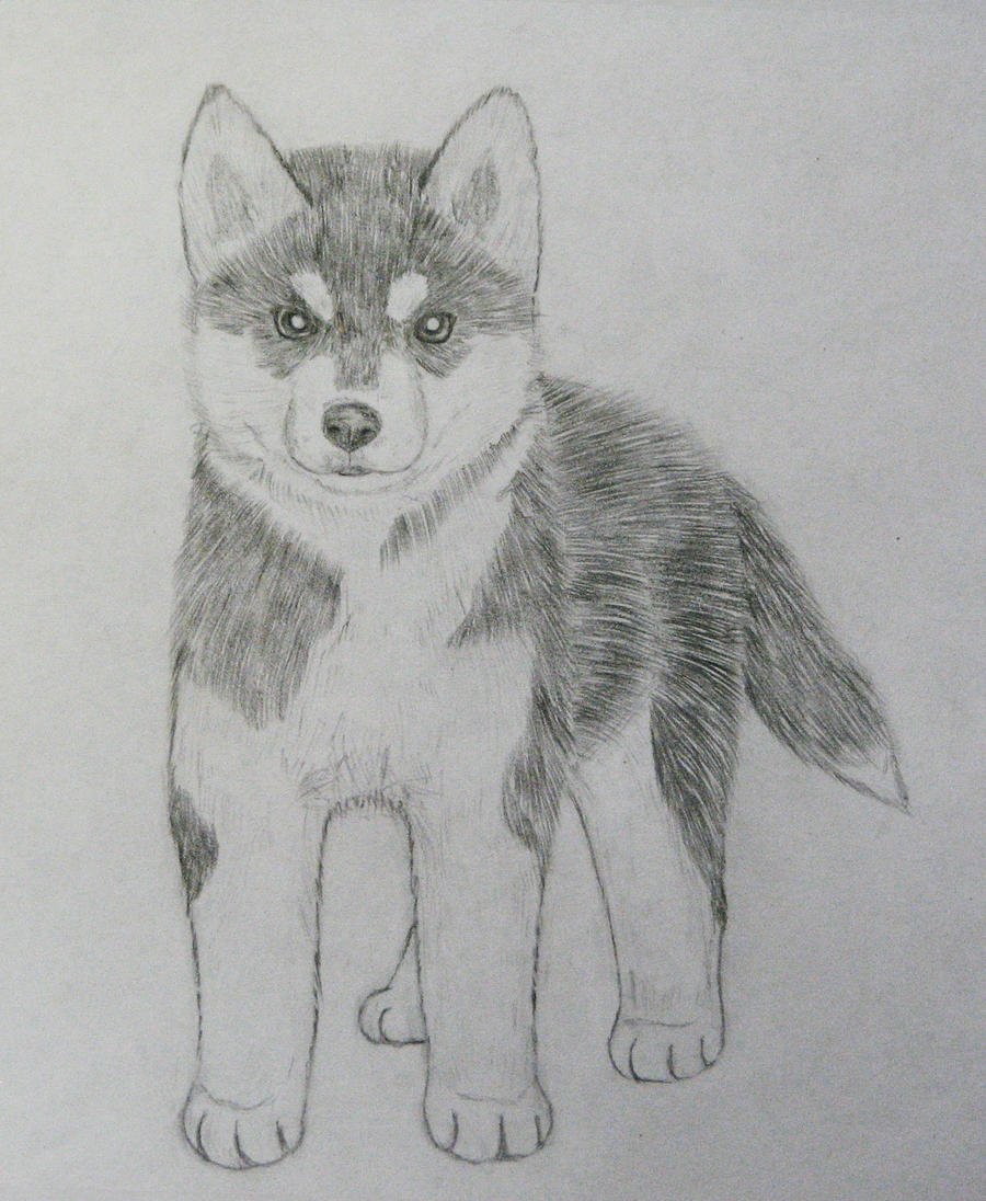 Cute Puppies   Cute Boxer Puppys   Cute Husky Drawings   Cute LabCute Husky Puppy Drawings