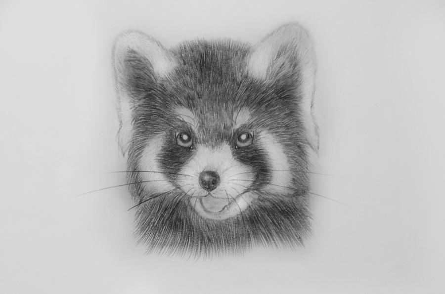 Red panda 6 by Pandakiddie on DeviantArt