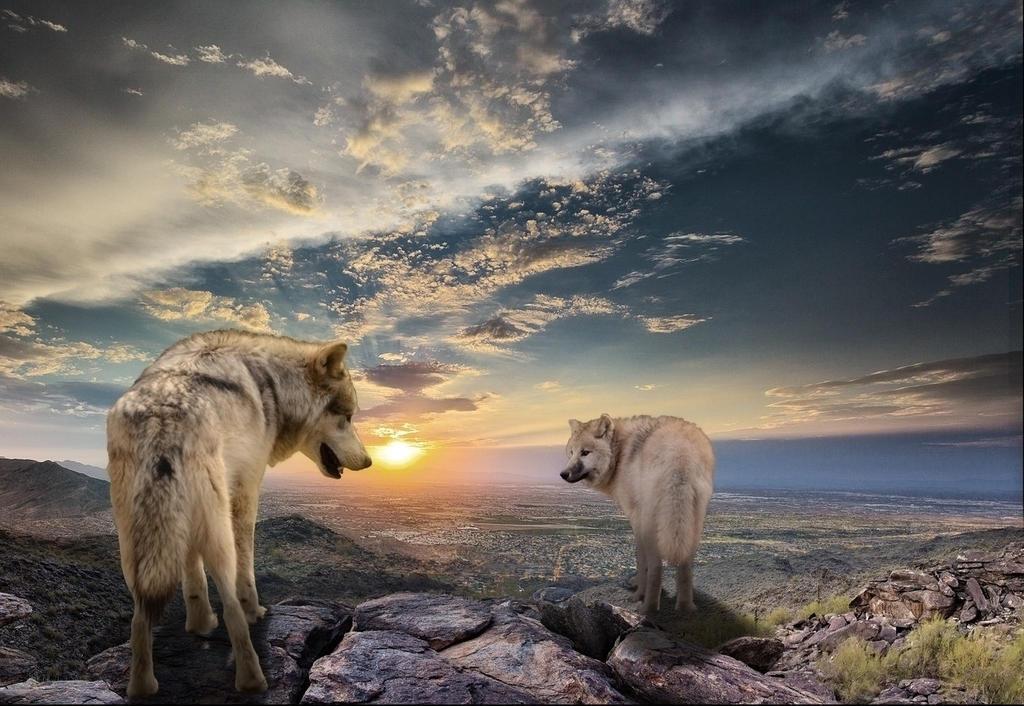 Two wanderers by Panda-kiddie