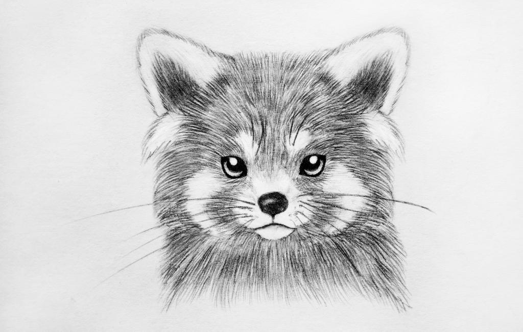 Red Panda: Sad cuteness by Panda-kiddie