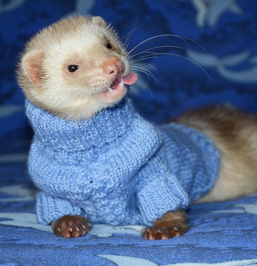 New Sweater by Panda-kiddie