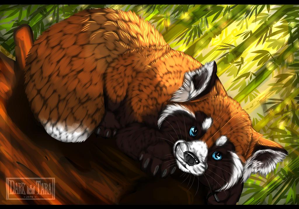 Panda-kiddie's Profile Picture