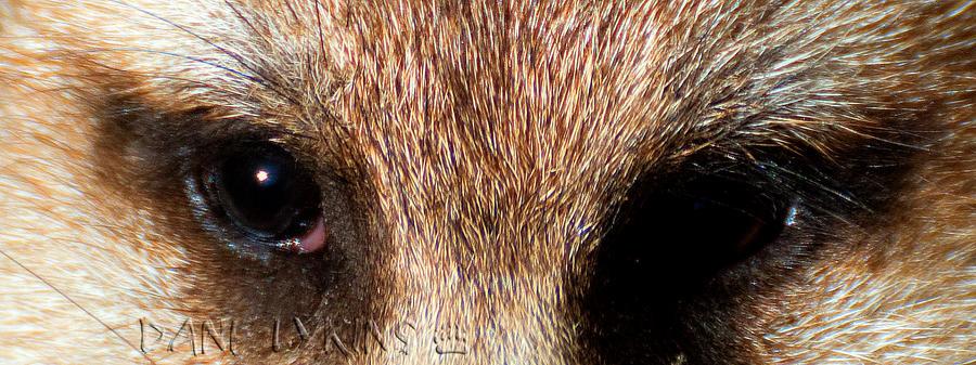 Suricate Stare by Macropus-Rufus