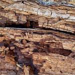 Crumbling Wood