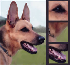 Commission - Alsatian Dog WIP by duece