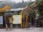 Giraffe Enclsure Taipei Zoo by Xantahelia