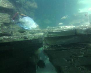 Landscape or Aquarium? by Wob-Wob