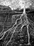 Roots by chicajlb06