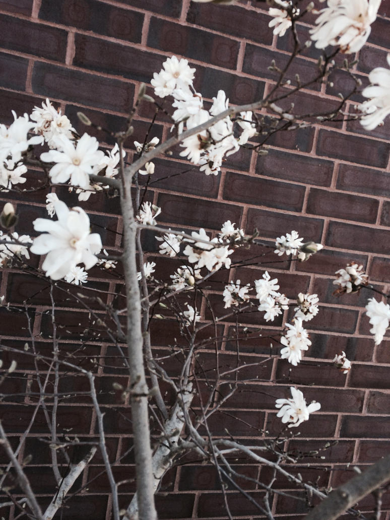 Spring is here! by MARVELcomicsnerd