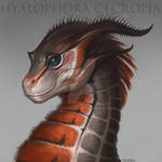 Commission for Flame-Shadow - Hyalophora cecropia