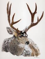 Mule Deer in Snow by mclanesmemories