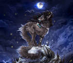 CP: Winter Nights