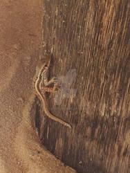 Sandy Lizard of Cuteness 2