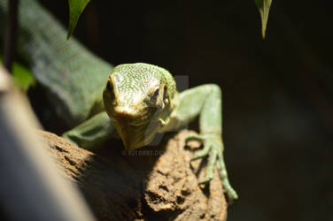 Tree Lizard 1