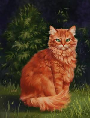 My cat Mordred by NimrodelDark