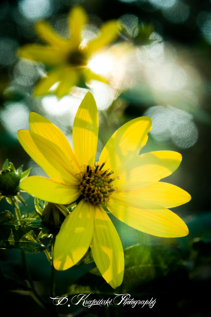 Flower by dkrajewskiphoto