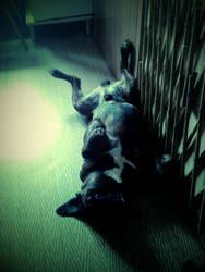 Beztroskie jest zycie psa...