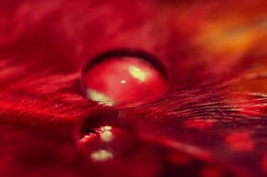 Drop... 6 by Lillian-Bann