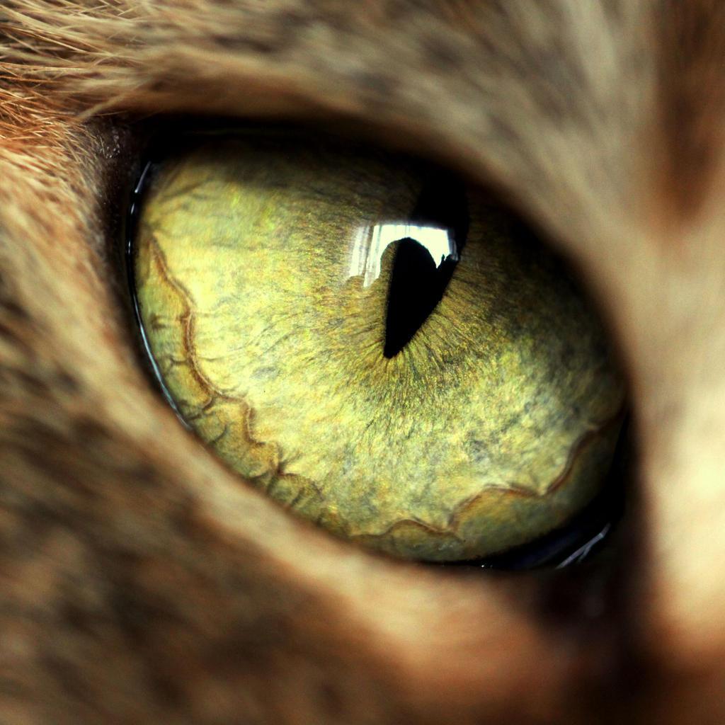 Eye by Lillian-Bann