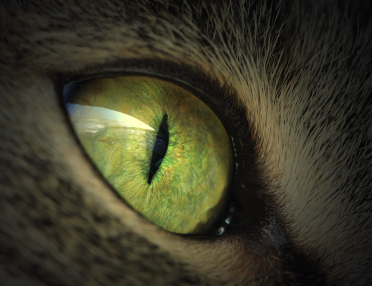 Dragon eye by Lillian-Bann