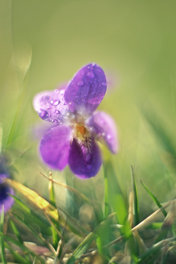 Violet iv. by Lillian-Bann