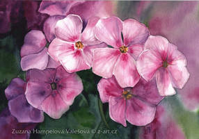 Phlox by Lillian-Bann