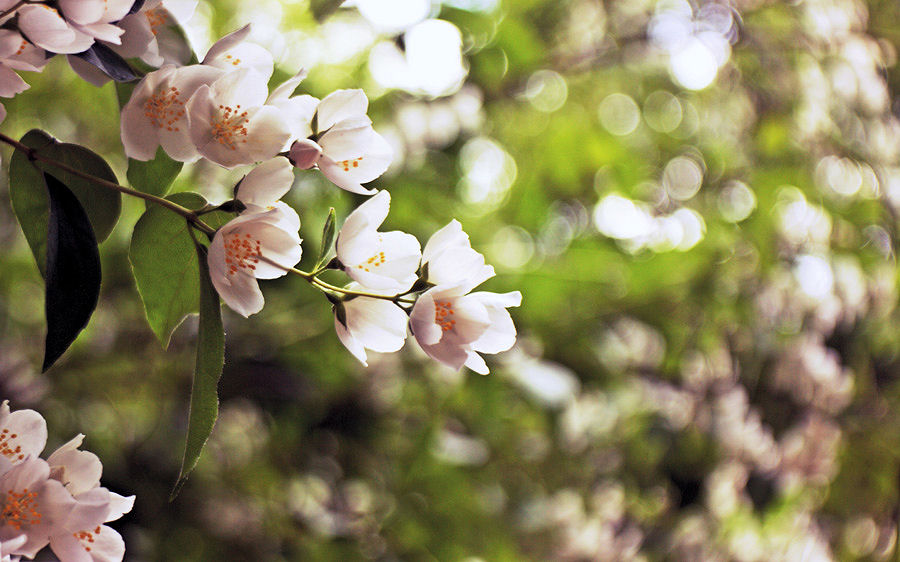 Blossom by Lillian-Bann
