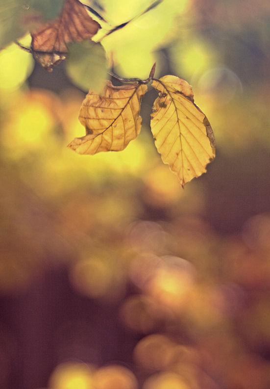 Warm fall by Lillian-Bann