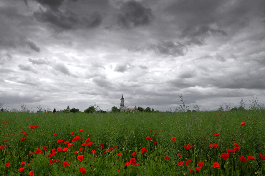 Poppies and church by Lillian-Bann
