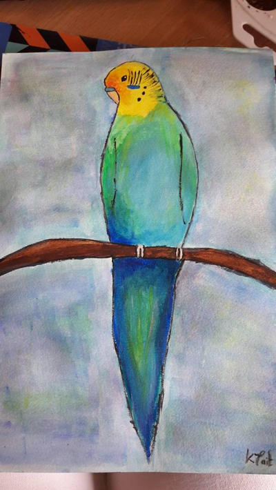 budgie by TaitGallery
