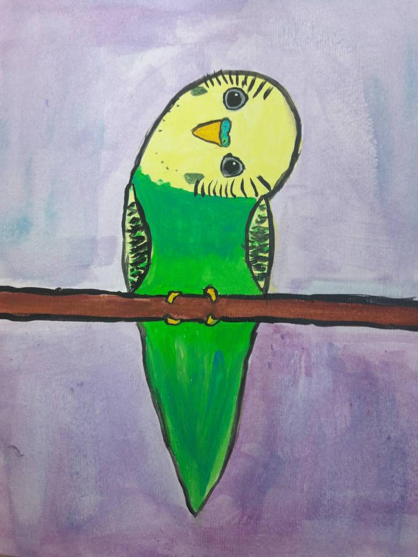 curious budgie by TaitGallery