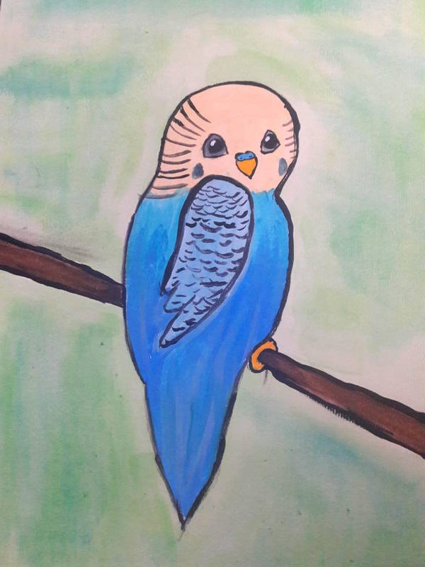blue budgie  by TaitGallery