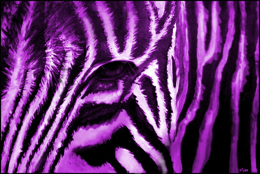 Purple And White Zebra Print Wallpaper fuzzy purple ze...
