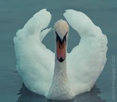 Last swan