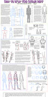 -Anatomy Tutorial-
