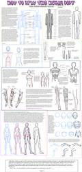 -Anatomy Tutorial- by odduckoasis