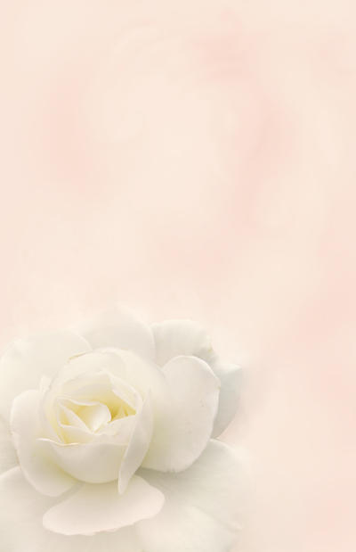 Dreamy rose template by drop-asd
